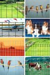 Electrowelded nets for fences